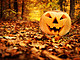 Halloween pumpkin in autumn forest