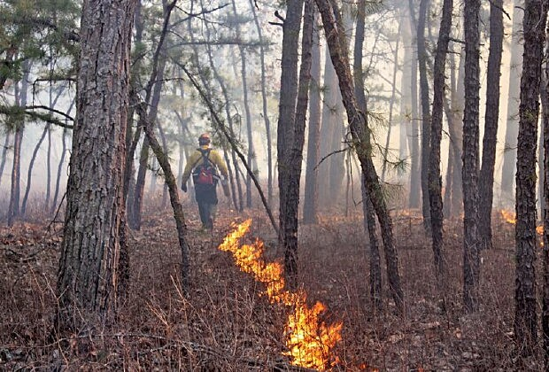 New Jersey State Forest Fire Service/Facebook