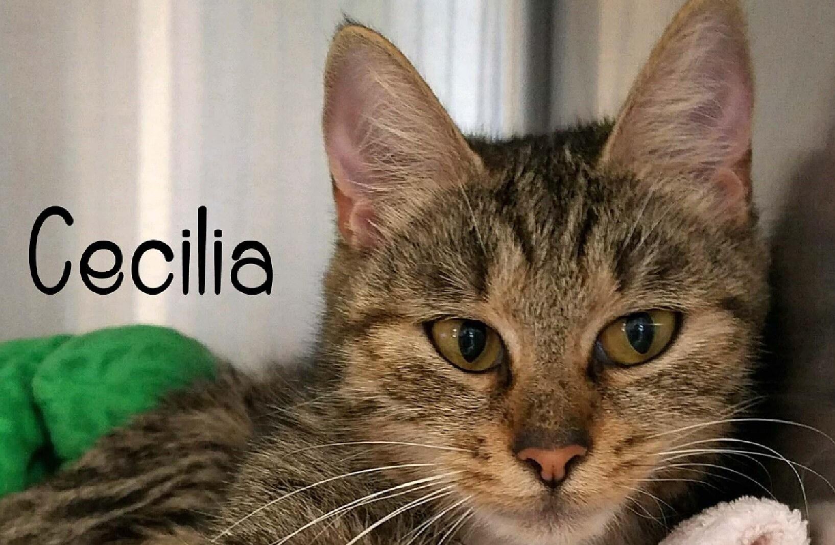 Cecelia/Humane Society of Ocean City