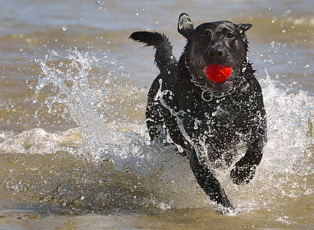 Chicago's Doggy Beach